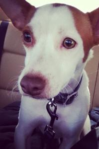 Pet Photo #8- Dexter